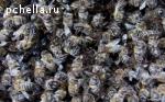 Алтайский Мед и продукты пчеловодства с личной пасеки