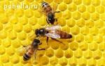 Матки пчелиные ценных пород